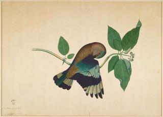 Fauna - Flora